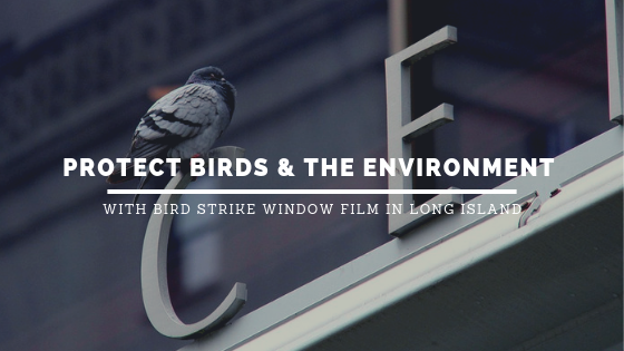 bird strike window film long island
