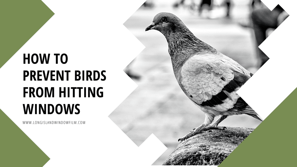 prevent birds hitting windows long island window film