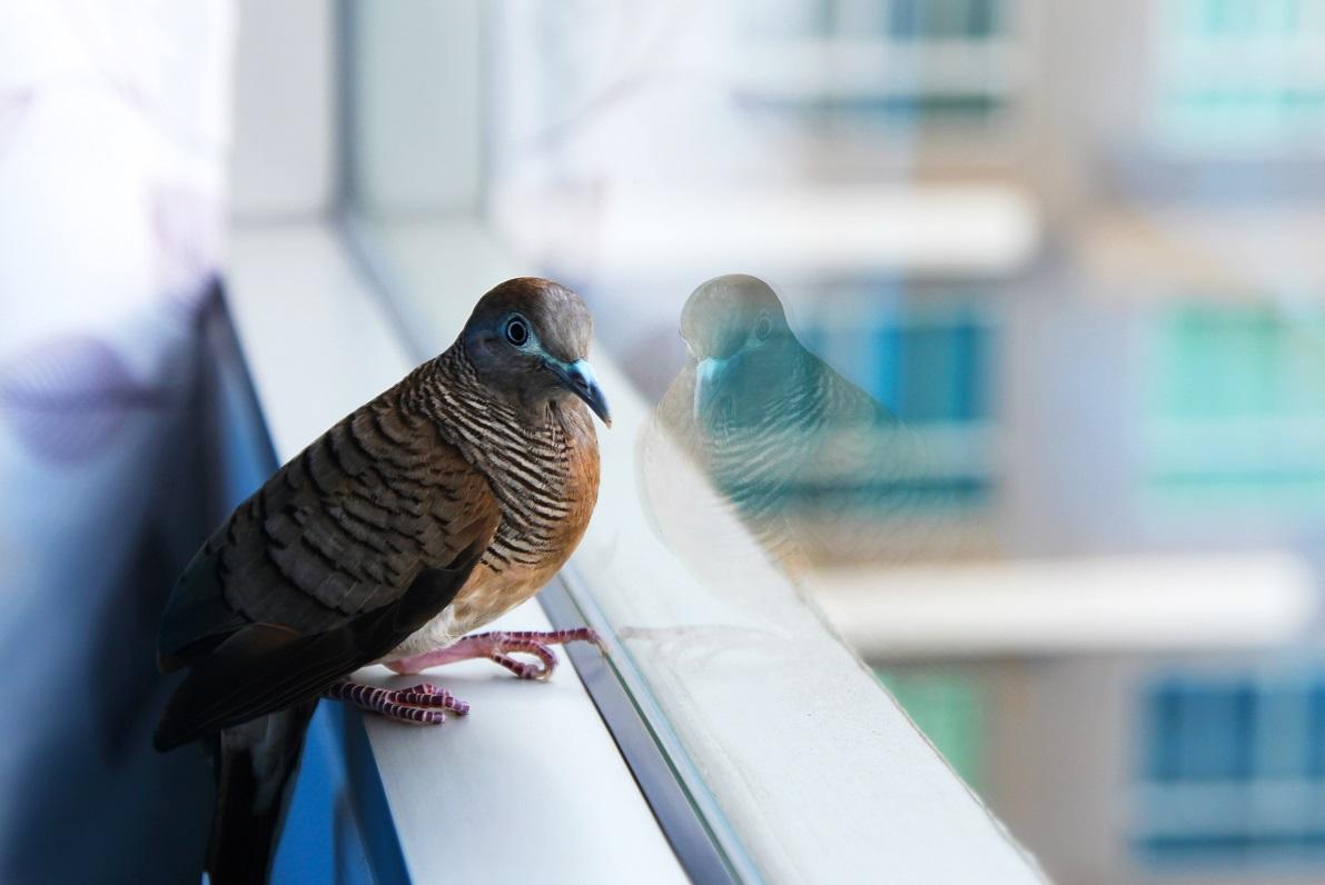 bird strike prevention film long island